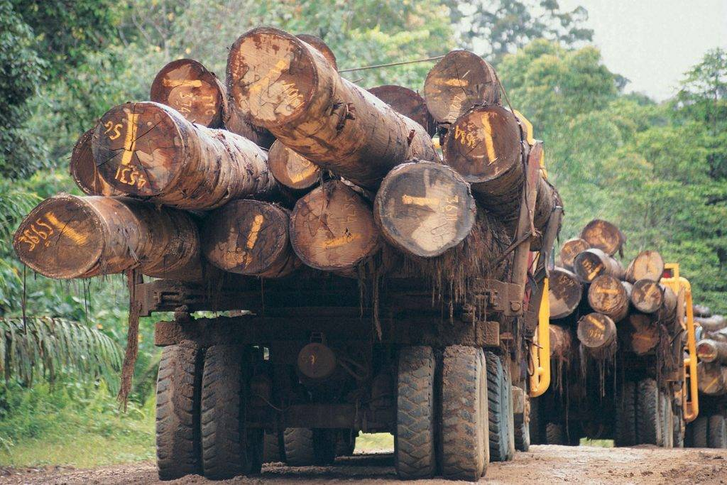 forestry equipment and plant finance